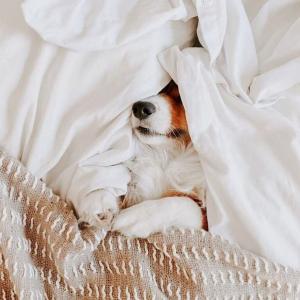 内服+外用 疏解你的不安疫情期间防焦虑 助眠解压专场来帮你