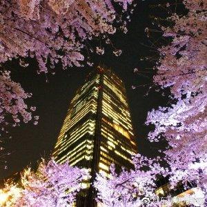 樱花季怎么能不去日本日本东京往返机票低至€461,从汉堡出发,含托运行李