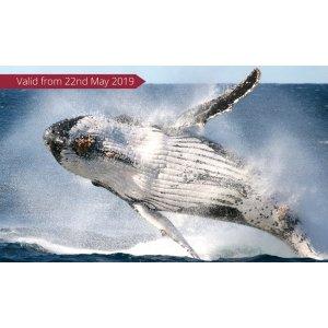 groupon周末一人观鲸体验