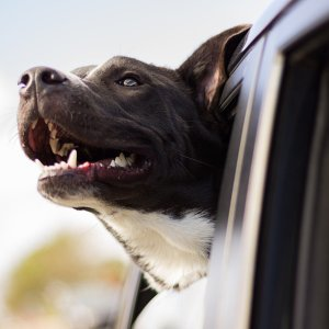 Up to 30% OffPetco Pet Vehicle Accessories on Sale
