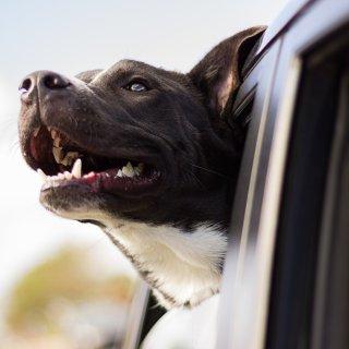低至7折 + 额外8.5折Petco 精选宠物汽车用品热卖 狗子坐车更安全