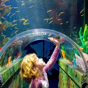 $22 (原价$28)  看呆萌海洋生物墨尔本 SEA LIFE  海洋水族馆通票热卖