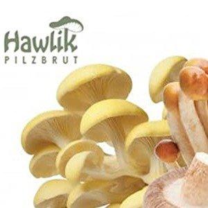 自给自足  种植小能手看过来了Hawlik Pilzbrut 家用型蘑菇培育箱专区 吃蘑菇不求人
