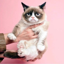 无门槛75折 £21入限量版猫咪粉饼Paul & Joe 日系疯抢人气彩妆热卖