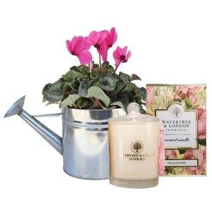 Edible BloomsCyclamen Silver Gift Hamper