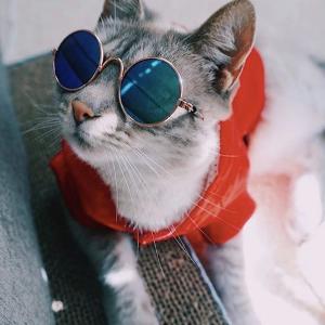 首月8折独家:Pretty Litter 健康监测变色猫砂 无尘抗菌除臭