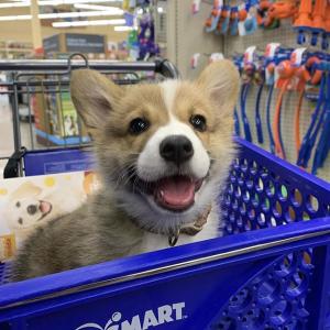 首单订阅享7折PetSmart 全场狗粮、猫粮、猫砂等热卖