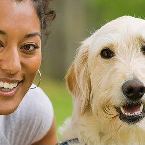 $9.95 (原价$99)爱它就尝试去了解它Groupon 狗行为学和动物心理学研究在线课程