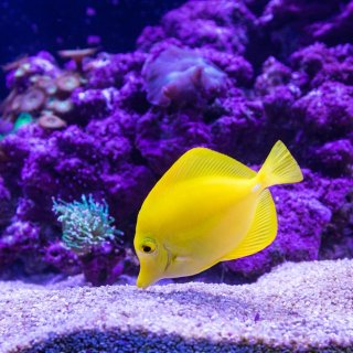 Up to 49% OffPetco Selected Marine Fish on Sale