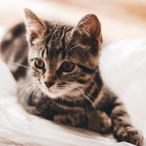 Up to 40% OffCat Beds on Sale @ Petco