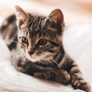低至6折Petco 精选猫咪床促销