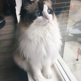 【Petcube Bites智能投食监视器】暗中观察猫主子背地里都干了啥