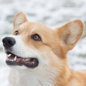 现在报名立得$50礼卡Petco 提供成年犬训练课程 小班制度 平均每周仅$20