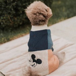 Max-BoneMickey Mouse Color Blocked Jumper