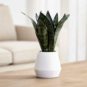 天然舒眠法你试了吗美国好物推荐 -- 7种常见盆栽植物助你一夜好眠