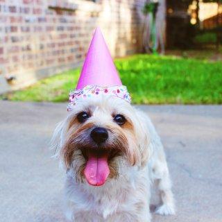 低至7折+额外8折Petco 精选宠物节日庆祝用品促销