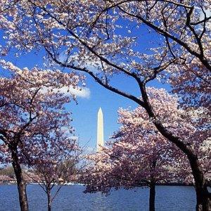 往返直飞$67起华盛顿DC 樱花季机票好价 美国多地出发