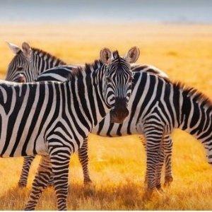 $2019起肯尼亚11天游猎+海滩旅行 含机票+酒店+交通+餐食等