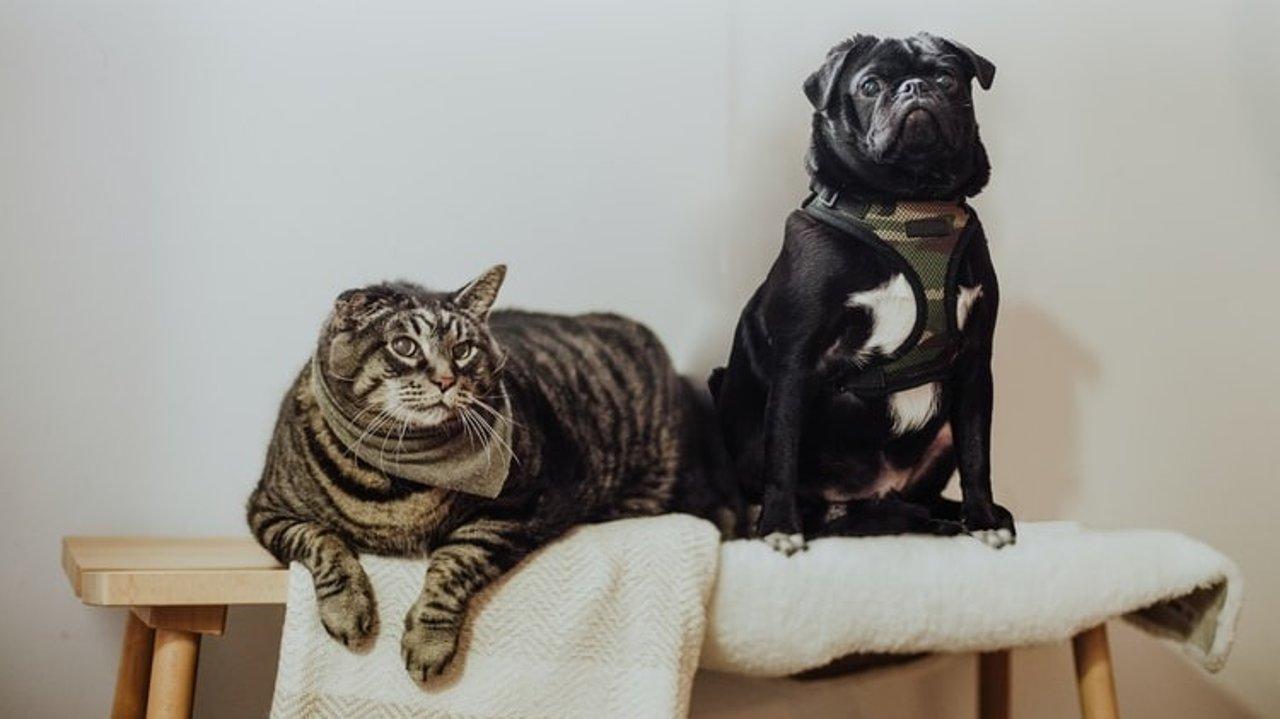 宠物保险怎么买?宠物保险有哪些种类?附买宠物保险注意事项