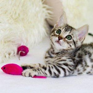店内取货享7.5折Petco 全场猫咪玩具热卖 低至$0.38