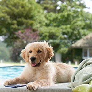 Up to 50% OffFrontline Plus Pet Flea & Tick Solutions on Sale