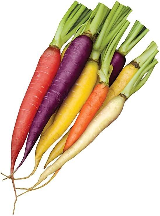 混合胡萝卜种子1500颗