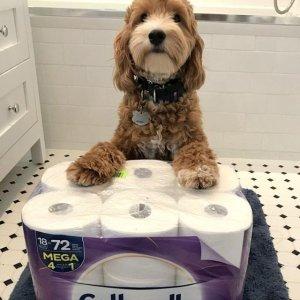 Cottonelle卫生纸12卷$5 美国大杏仁$5今日抢好货:Amazon 每日最热榜 加热按脚仪仅$78