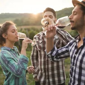 $119 + $20 off $60Napa and Sonoma Wine Country Tour from San Francisco