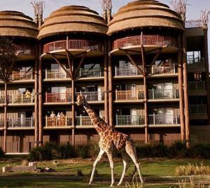 $589.72迪士尼动物王国度假酒店 跟长颈鹿吃住在一起