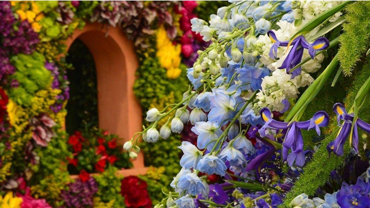 切尔西花展2021 | 广州花园荣获本届Chelsea Flower Show最佳展示园!看点速戳!