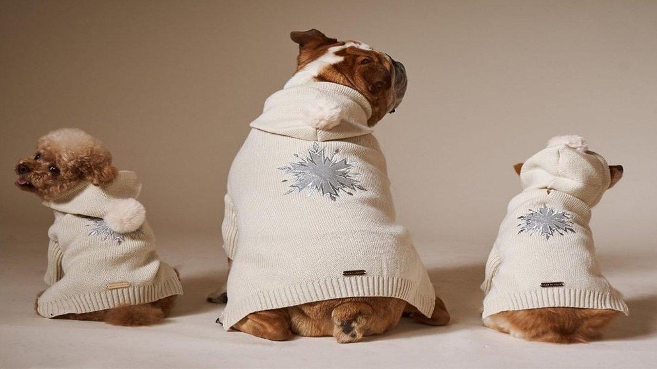 Max-Bone高端宠物用品︱宠物界的爱马仕,大气上档次,承包萌宠全年爱用品!