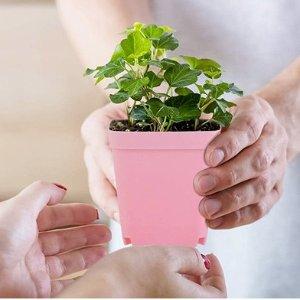 $15.25(原价$40) 10个装彩色植物花盆 轻巧耐用 自带排水孔保持土壤通风 让花花长得更好