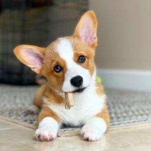 新用户注册立得$10Rover 宠物寄养 托管 监护等服务,萌宠界的Airbnb