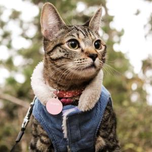 低至7.5折Petco 猫咪洁牙用品、零食等促销