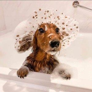 8折起+额外7.8折 免洗喷雾£10独家:BellyDog 宠物洗澡用品专场好价 纯天然洗护超安心