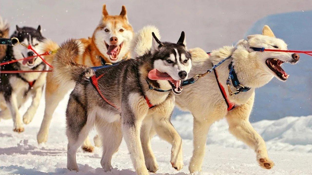 你适合养什么狗?不同品种狗狗性格大揭秘