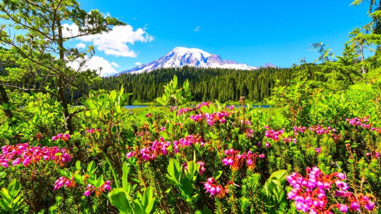 【旅行】瑞尼尔山国家公园三天两晚赏花攻略(含露营装备大全)—活猪子の国家公园指南(2)