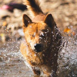 全场8.5折+免邮PetCareSupplies 宠物清洁用品促销热卖