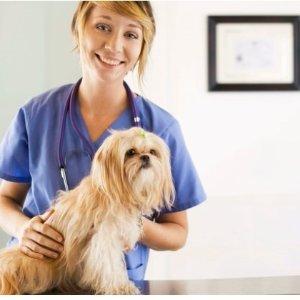 $9 (原价$175)救死扶伤Groupon 兽医在线课程 国际认证证书