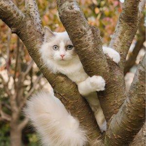 Petco 精选猫爬树促销热卖