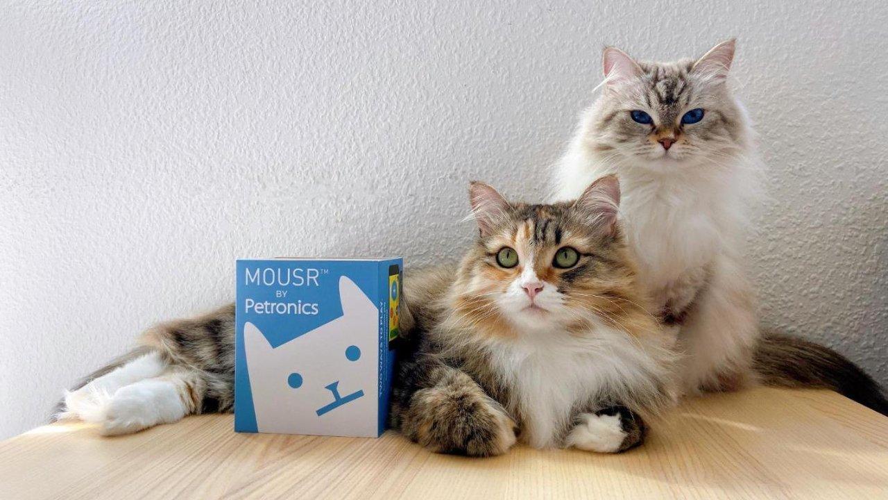 解放双手 | Petronics遥控逗猫棒众测