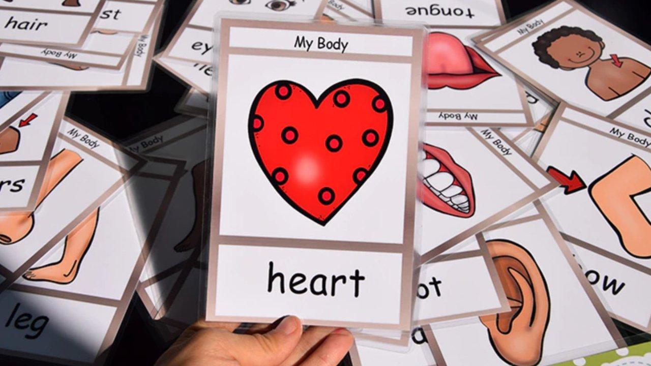 身体主要部分,器官英文怎么说?记住这些,看医生描述病情不用愁!