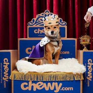 From $0.88Shop Today's Deals @Chewy