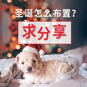 码文+晒货#圣诞装饰#圣诞节怎么布置家里?装饰哪里买?