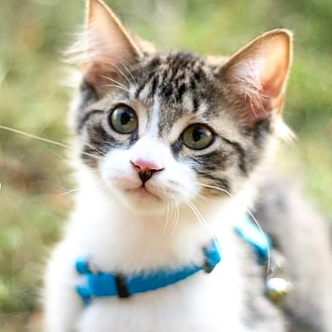 Up to 50% OffPetco Cat Collars, Leashes & Harnesses on Sale