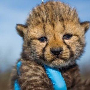 Panda,Cheetah and MoreSmithsonian's National Zoo's Live Stream