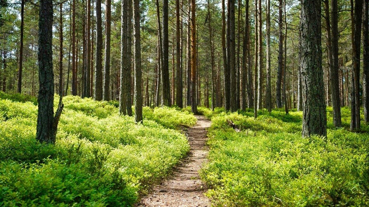 12个旧金山湾区周边hiking好去处,经典trails推荐!放松身心、强健体质还能欣赏美景!