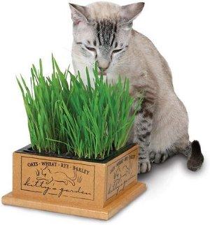SmartCat Kitty's Garden - Chewy.com