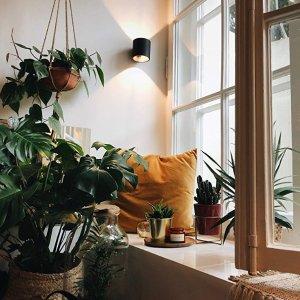 低至6.2折Shop Succulents 室内多肉植物等促销