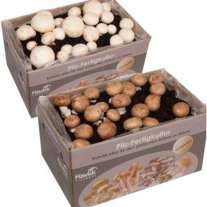 €23.5收大盒 多品种Amazon 蘑菇种植箱 给水就长产量惊人 体验居家种植的快乐